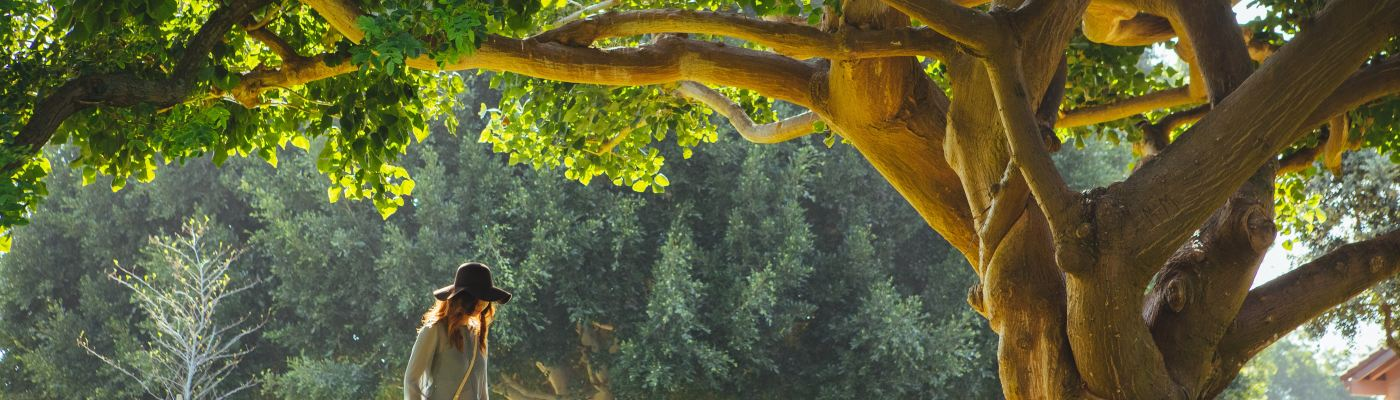 Augustine Oak Bound by Palm