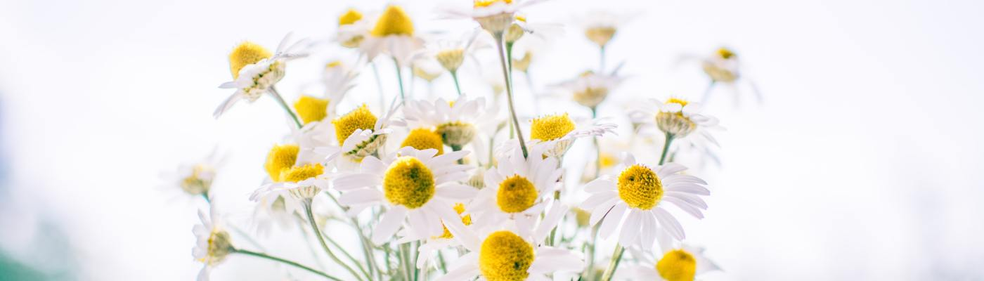 A vase of daisies to illustrate the poem: You Deserve