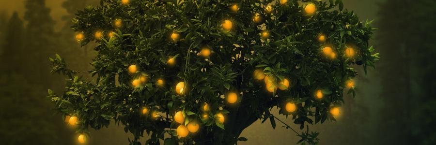Blood Oranges, by Melaney Lara