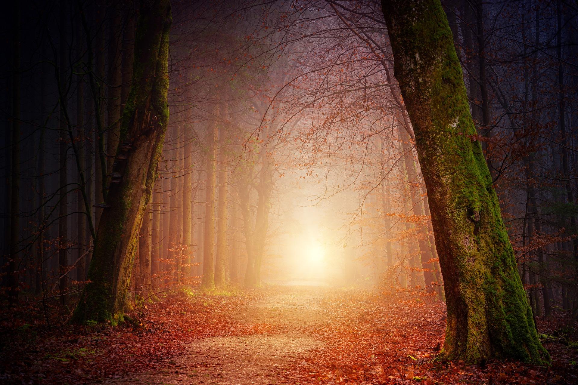 Forest, written by Catherine Fasoro