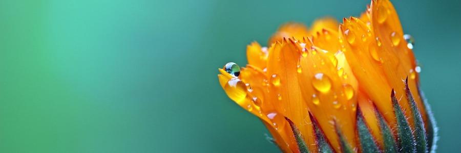 Bloom, written by Haikal Sean